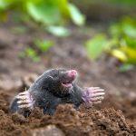 Mole Care and Soul Care Image